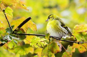 Birds Worship Buddhist Chanting