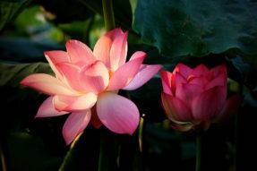 Avalokiteshvara Helped Mother of Fan Zhongyan