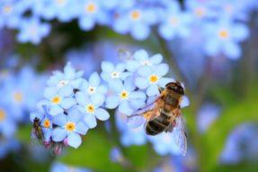 Teachings of A Bee